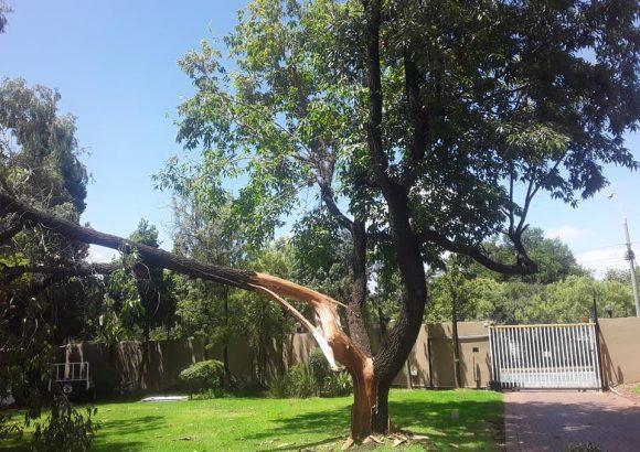 Camperdown Tree Felling Services